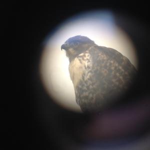 Stevebob through the telescope